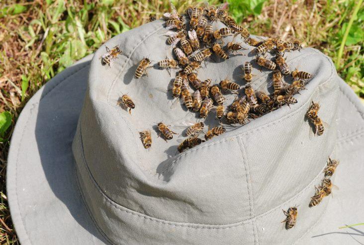 כובע עם דבורים