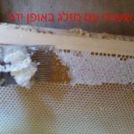 פתיחת חלת דבש