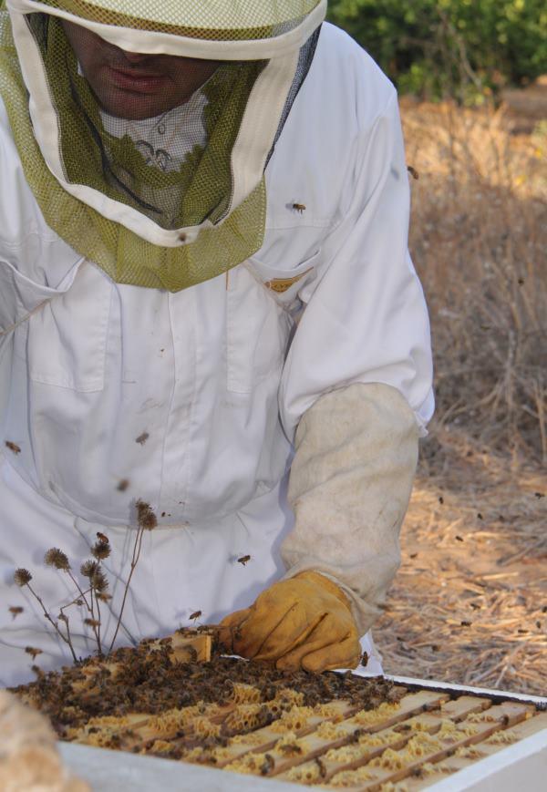 סוכות 2016 דבורים