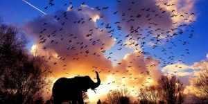 Bees And Elephant