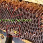 עש דונג Wax Moths