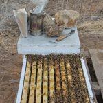מַדֵּף – Smoker כלי המפיק עשן כדי להשקיט את הדבורים בעת הביקור