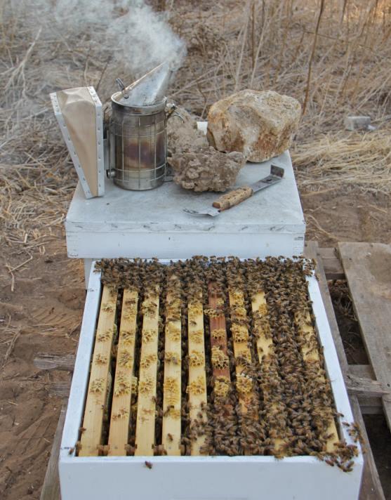 למה משתמשים בעשן כשעובדים עם דבורים, בכוורת ?