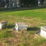 דבורים בכוורות זרוקות באמצע השדה
