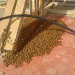 כיצד מפנים נחיל דבורים - שיטות והמלצות