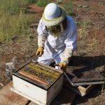 בחינת כוורת דבורים