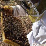 בחינת חלת דבש מפלסטיק