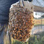 טיפים בגידול דבורים - שימוש בגומיות משרדיות