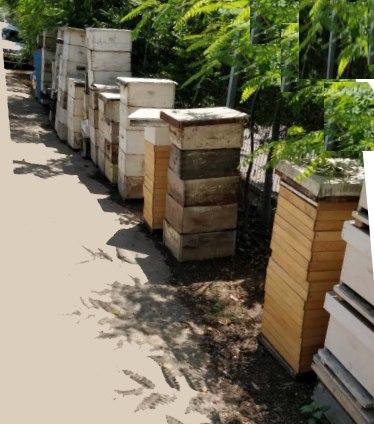שביל כניסה מלא ציוד לדבורים