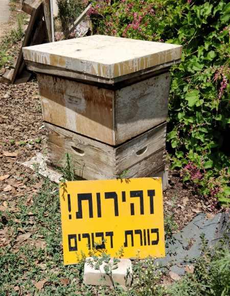 זהירות כוורת דבורים