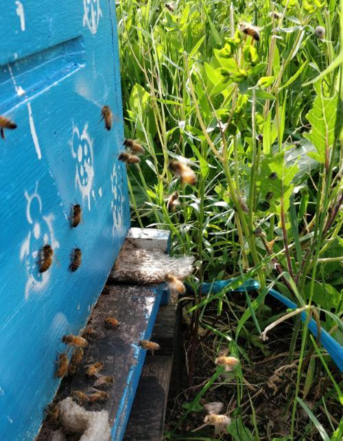 כניסה לכוורת דבורים