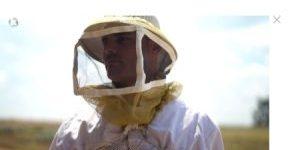 גידול דבורים ערוץ 12