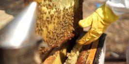 מאקו - MAKO חלת דבורים